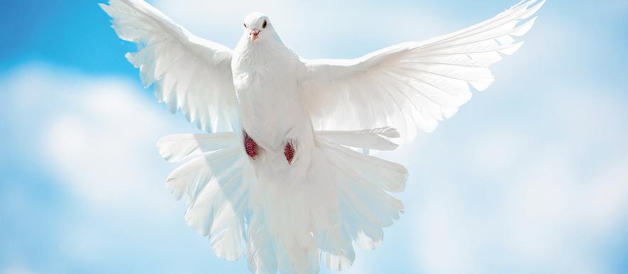 CHƯƠNG TRÌNH THỜ PHƯỢNG DÀNH CHO BAN PHỤ NỮ. CHÚA NHẬT 03.10.2021